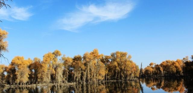 Luntai Huyang Poplar Forest Park-