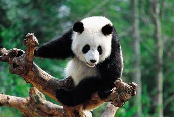 Top Wildlife & Nature Destinations