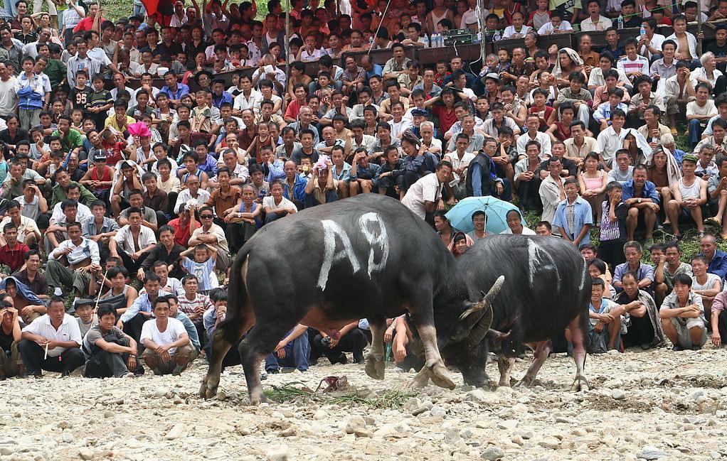Bullfight Festival