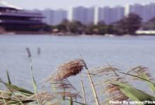 Wuyuan Bay Wetland Park