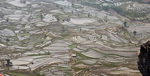 Honghe Hani Rice Terraces