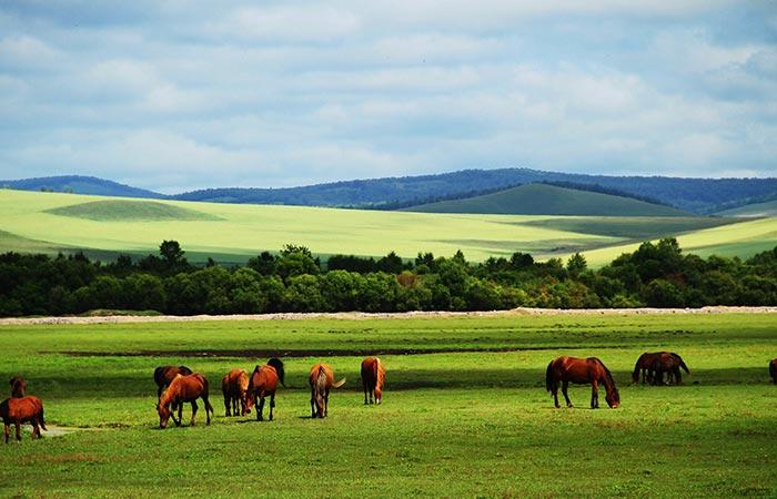 Xilamuren Grassland