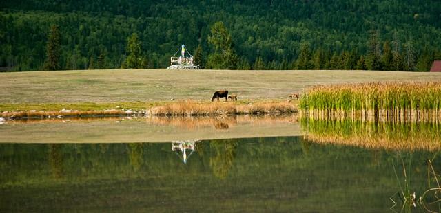 Southern Mountain Pasture