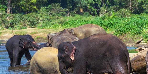 Wild Elephant Valley