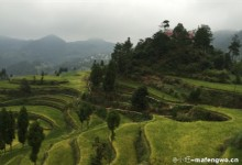 Spectacular Views of Mingao Terraced Fields in the Rosy Cloud