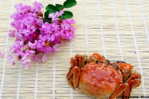 Eating Yangcheng Lake Hairy Crabs in Shanghai