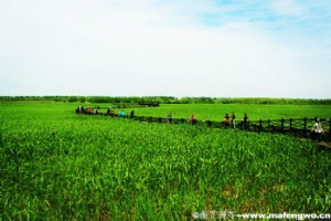 Natural Beauty of Xisha Wetland Park