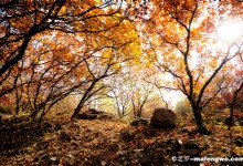 The Natural Yingshan Forest Park