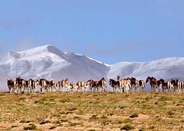 Altun-Mountains-InternationalHunting-Field