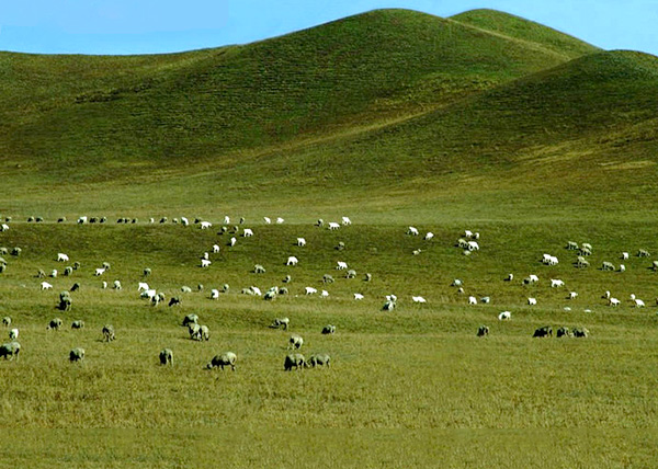 Location : Dulan County, Haixi Prefecture, Qinghai Province
