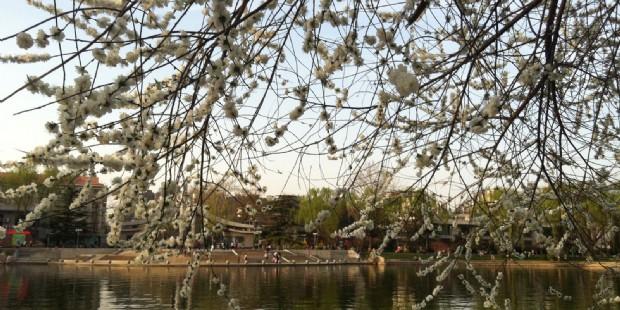Beijing Peach Blossom and Cherry Blossom 5 Days Muslim Tour