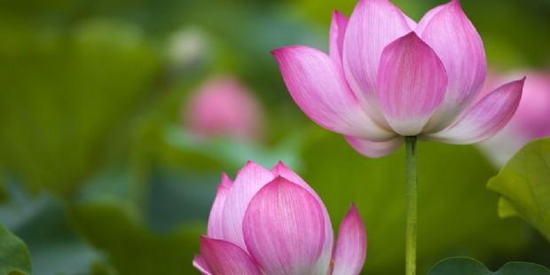 Beijing Lotus 5 Days Muslim Tour