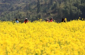 Beijing Flowers 5 Days Muslim Tour