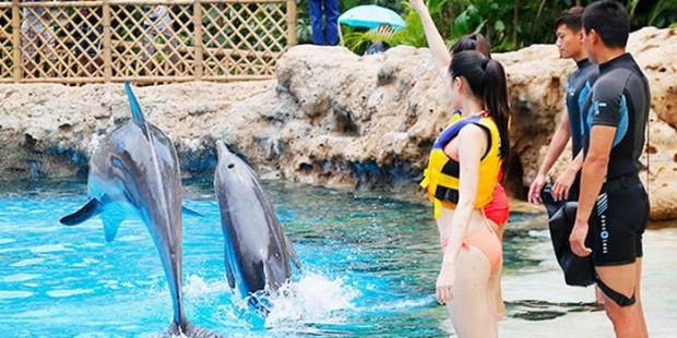 Chimelong Ocean Kingdom & Hong Kong 5 Days Tour