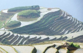 Longji Rice Terraces 1 Day Tour (SIC)