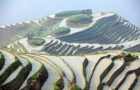 Longji Rice Terraced Field
