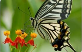 Hong Kong Wetland Park butterfly garden