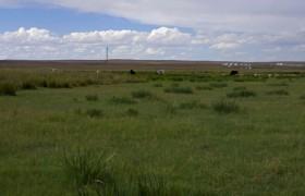 Inner Mongolia Grassland 4