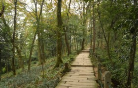 Chengdu Mt. Qingcheng One Day Tour