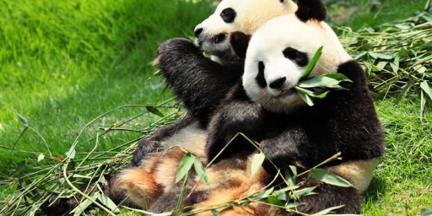 Panda Keeper and Chengdu Highlights 4 Days Tour