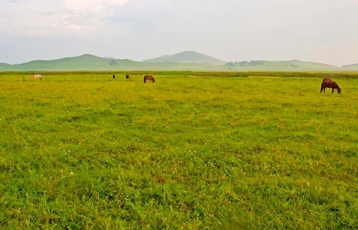 Longdeng Grassland