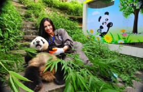Panda Volunteer One Day Tour at Bifengxia Panda Base