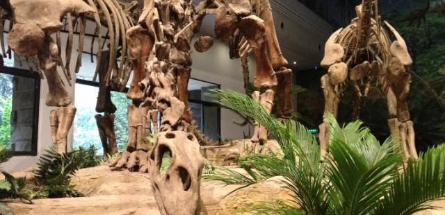 Zigong Dinosaur Museum