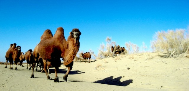 Gurbantünggüt Desert