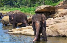 Wild Elephant Valley 2