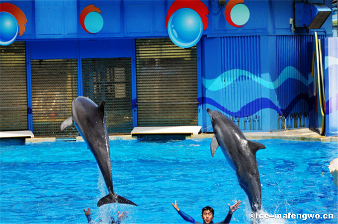 Christmas at Hong Kong's Ocean Park-2.png
