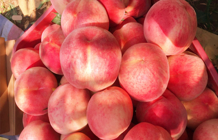 Beijing-Autumn-Peaches.jpg