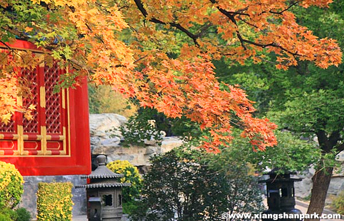 Beijing-Fragrant-Hill.jpg
