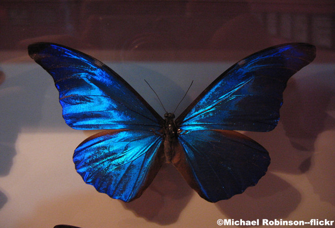 Shanghai-Insect-Museum1.jpg