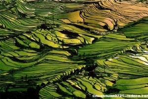 Tips for Traveling in Yunnan