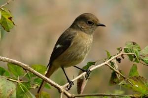 Bird Watching in Hong Kong