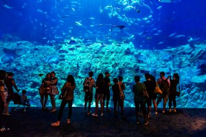 Underwater World Experiences in Hong Kong