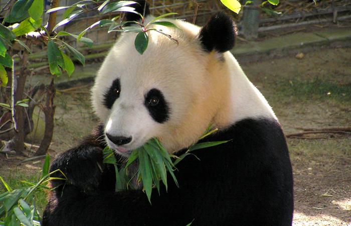 Hangzhou Panda Research and Breeding Center