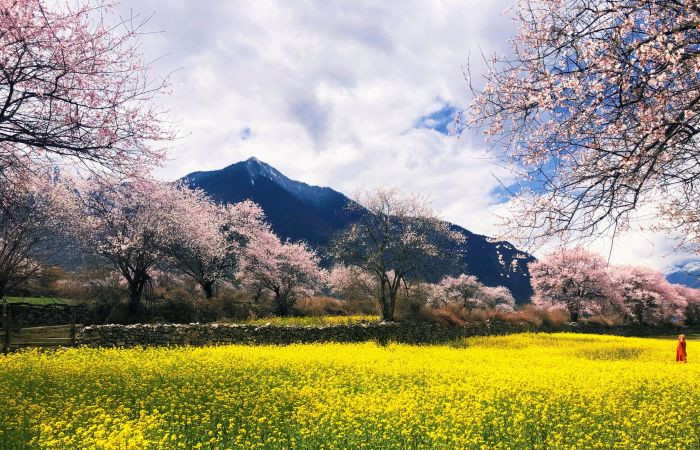 2020 Tibet Nyingchi Peach Blossom Festival