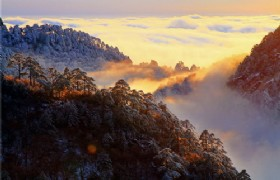 huangshan golden forest in winter