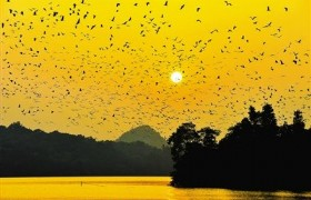 bird watch in winter time at Star Lake Zhaoqing