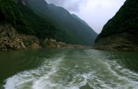 Shennong Stream 2
