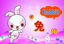 Characteristics of Rabbit