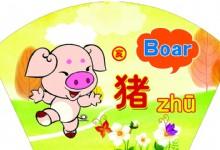 Characteristics of Pig