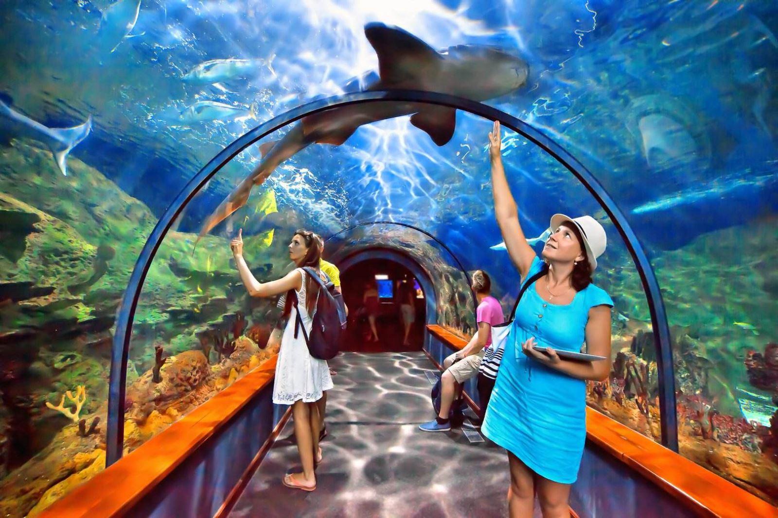 1-Day Singapore SEA Aquarium E-Ticket
