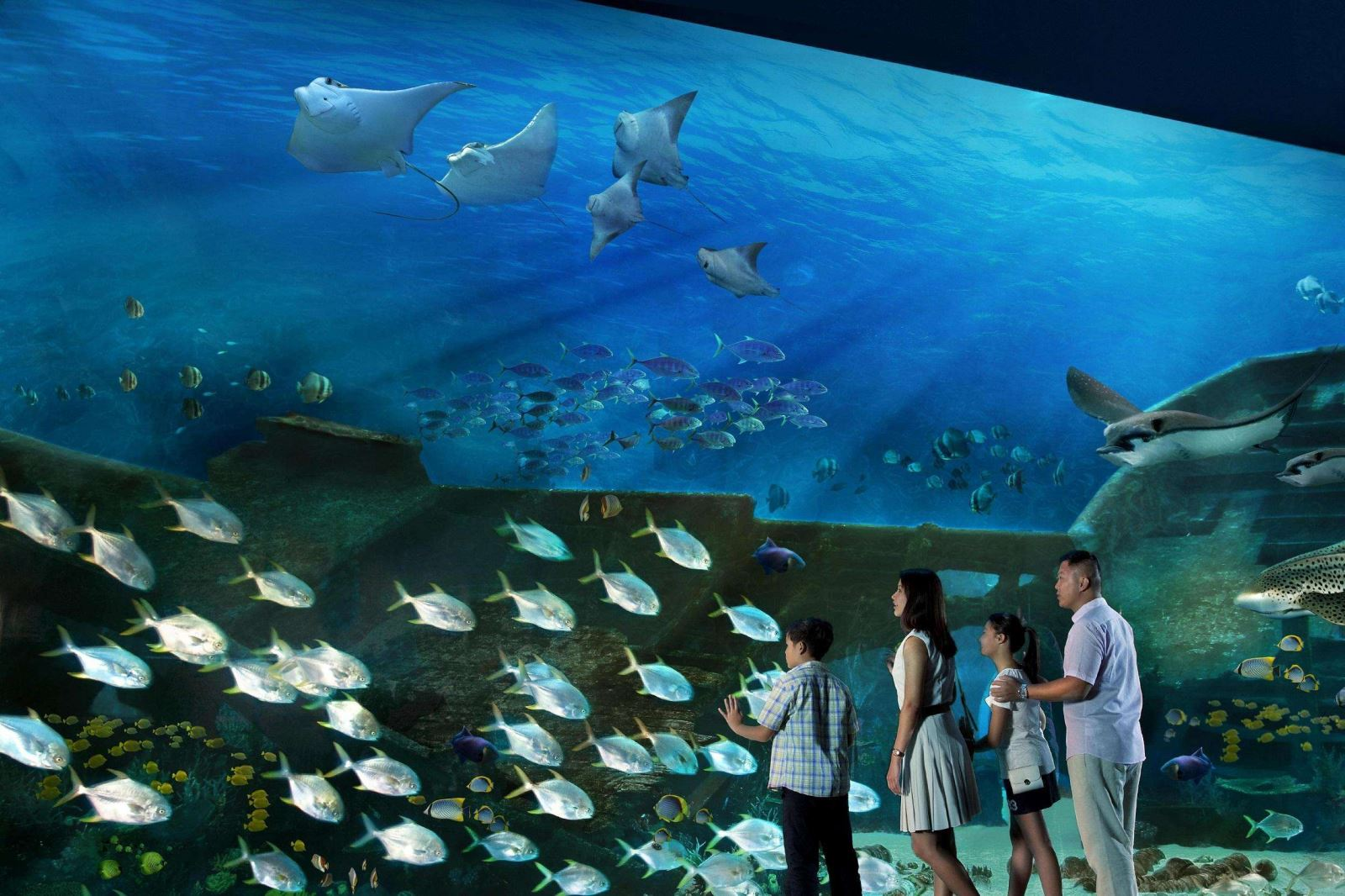 SEA Aquarium Admission with Hotel Pickup from Singapore