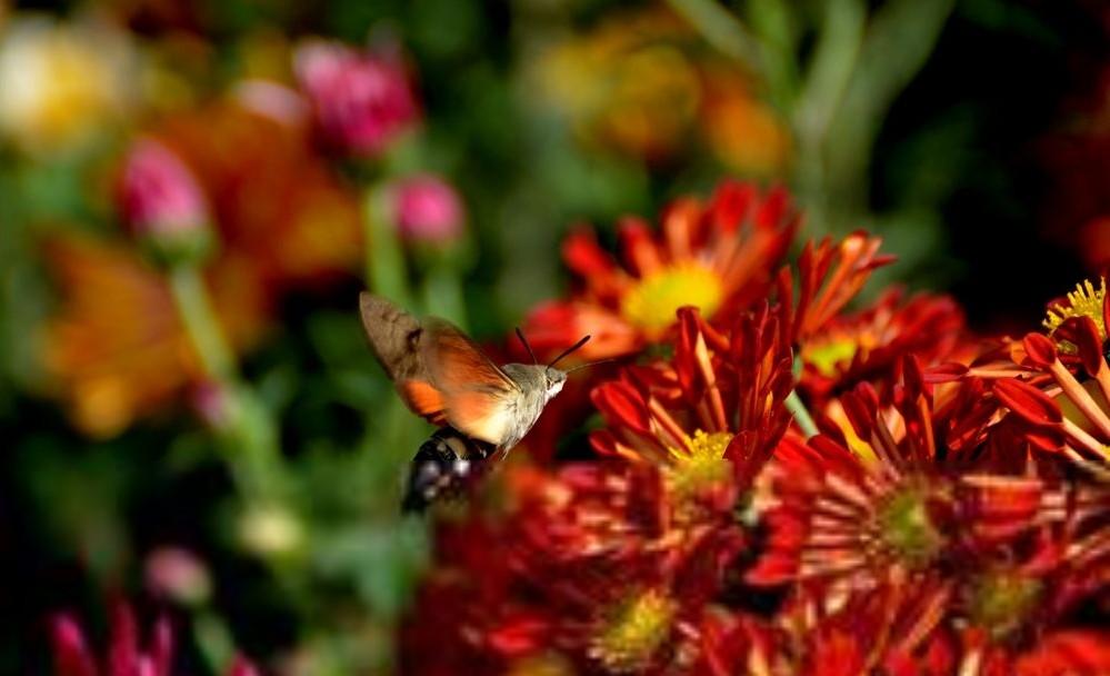 Beijing Chrysanthemum Exhibition