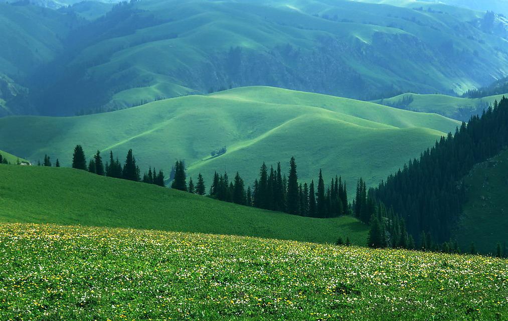 Narat Pastureland