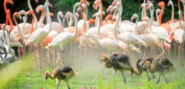Chimelong Birds Park