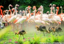 Chimelong Birds Park
