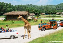 Chimelong Xiangjiang Safari Park